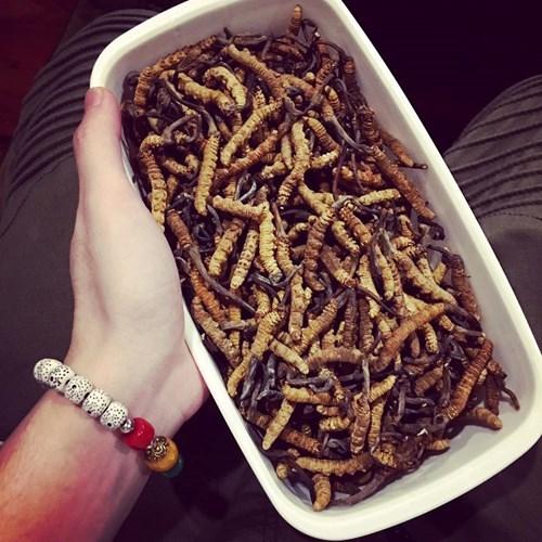 Cách ăn đông trùng hạ thảo để có công dụng tốt nhất - Ảnh 5