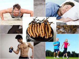 Đông trùng hạ thảo tốt cho sức khoẻ